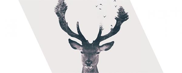 double exposure deer thumbnail
